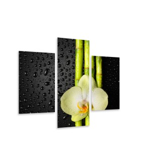 Multi-canvas 3x Orchid bamboo
